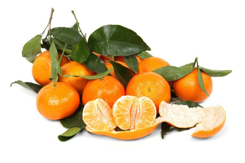 Выращивание мандарина в домашних условиях