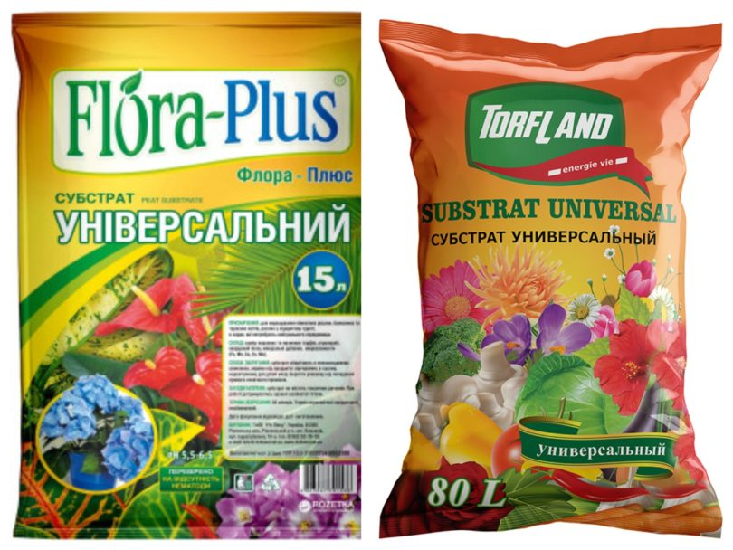 Кливия комнатный цветок: описание, как ухаживать, выбор горшка и грунта, как заставить цвести